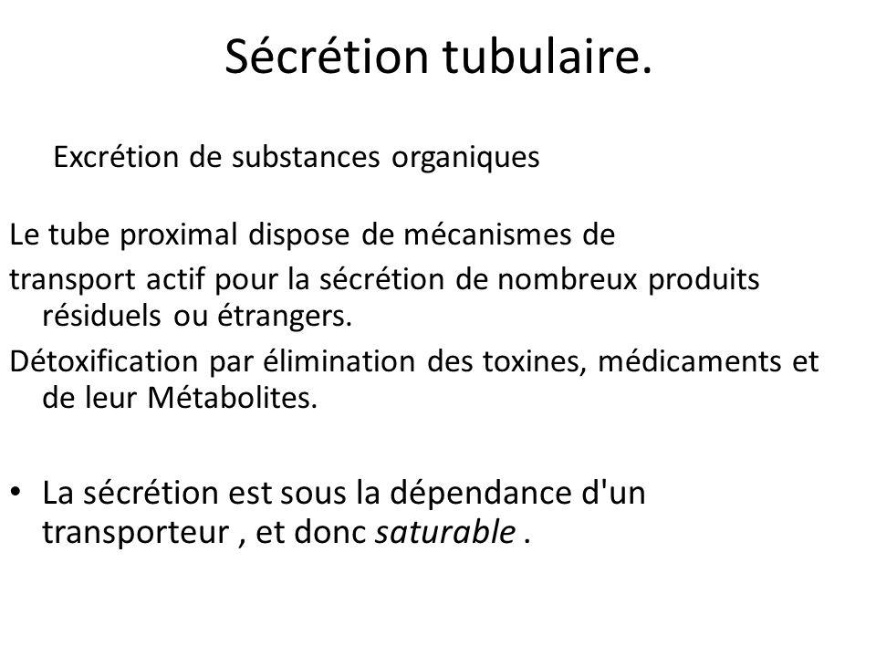 Sécrétion tubulaire. Excrétion de substances organiques Le tube proximal dispose de mécanismes de transport actif pour la sécrétion de nombreux produi