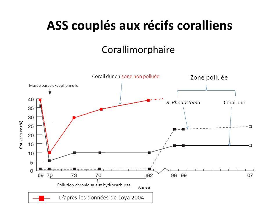 ASS couplés aux récifs coralliens Corallimorphaire Corallimorphés (R.