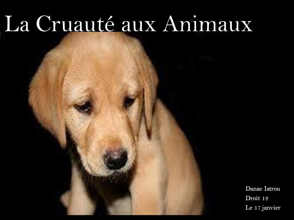 La Cruauté aux Animaux Danae Iatrou Droit 12 Le 17 janvier