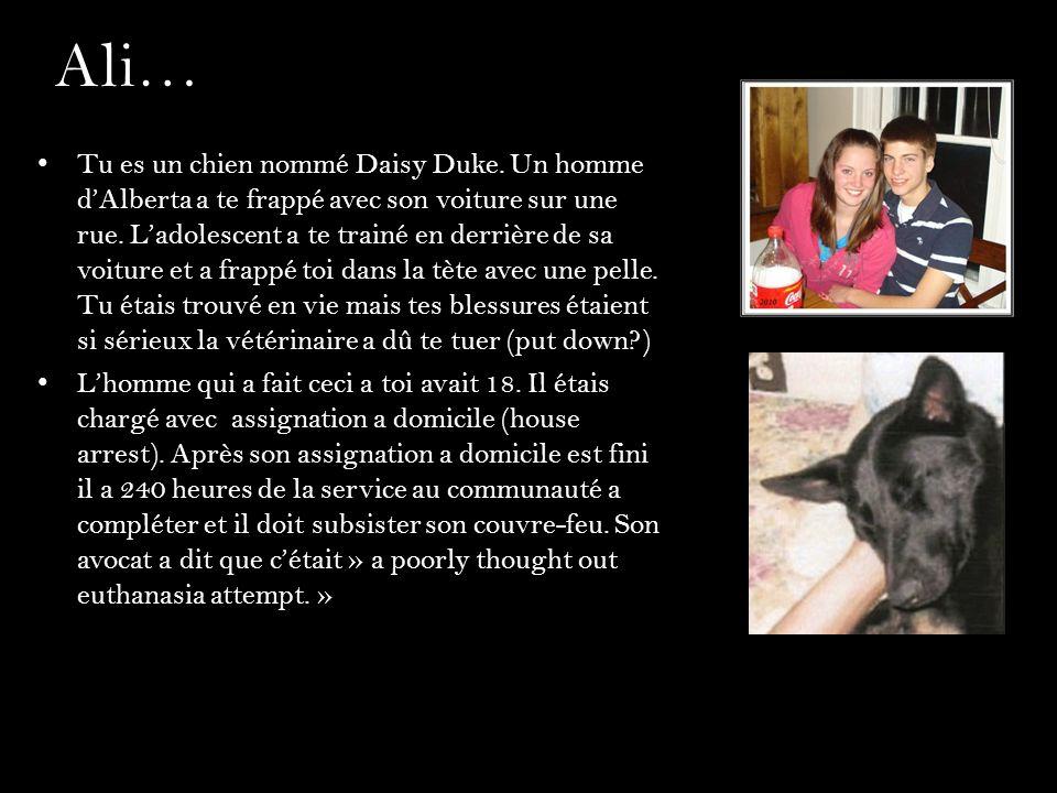 Ali… Tu es un chien nommé Daisy Duke. Un homme dAlberta a te frappé avec son voiture sur une rue. Ladolescent a te trainé en derrière de sa voiture et