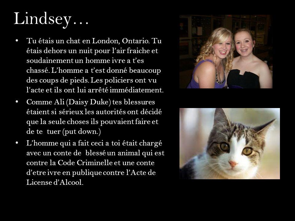 Lindsey… Tu étais un chat en London, Ontario. Tu étais dehors un nuit pour lair fraiche et soudainement un homme ivre a tes chassé. Lhomme a test donn