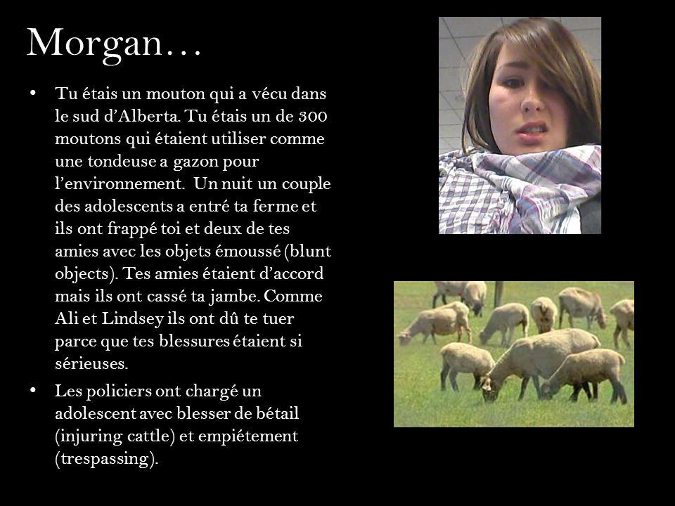 Morgan… Tu étais un mouton qui a vécu dans le sud dAlberta. Tu étais un de 300 moutons qui étaient utiliser comme une tondeuse a gazon pour lenvironne