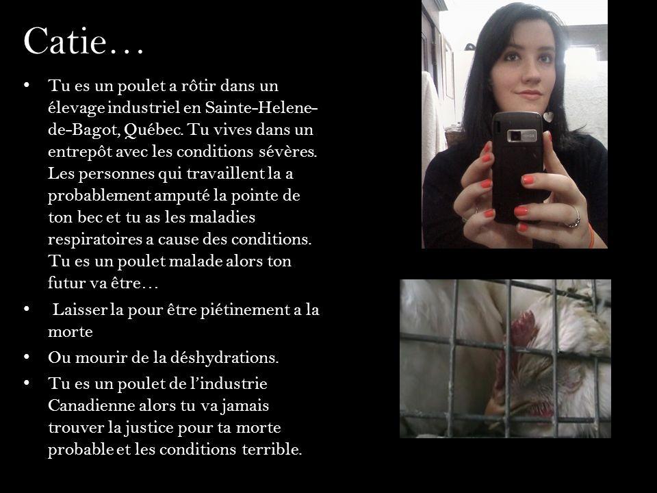 Catie… Tu es un poulet a rôtir dans un élevage industriel en Sainte-Helene- de-Bagot, Québec. Tu vives dans un entrepôt avec les conditions sévères. L