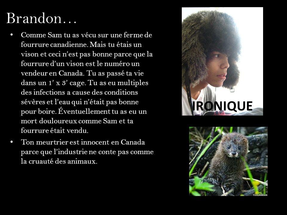 Brandon… Comme Sam tu as vécu sur une ferme de fourrure canadienne. Mais tu étais un vison et ceci nest pas bonne parce que la fourrure dun vison est