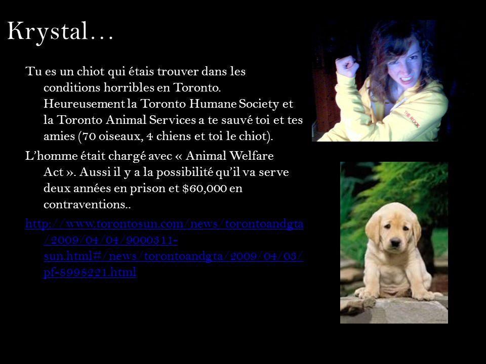 Krystal… Tu es un chiot qui étais trouver dans les conditions horribles en Toronto. Heureusement la Toronto Humane Society et la Toronto Animal Servic