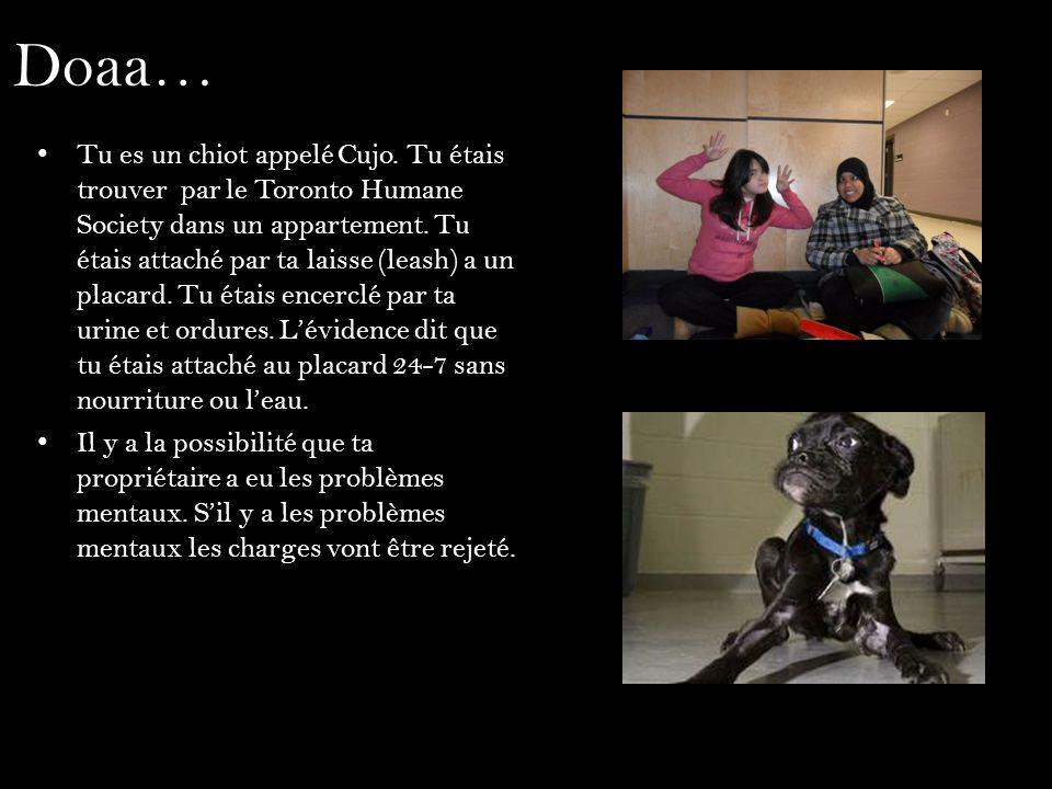 Doaa… Tu es un chiot appelé Cujo. Tu étais trouver par le Toronto Humane Society dans un appartement. Tu étais attaché par ta laisse (leash) a un plac