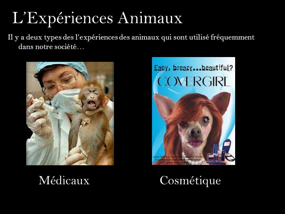 LExpériences Animaux Il y a deux types des lexpériences des animaux qui sont utilisé fréquemment dans notre société… MédicauxCosmétique