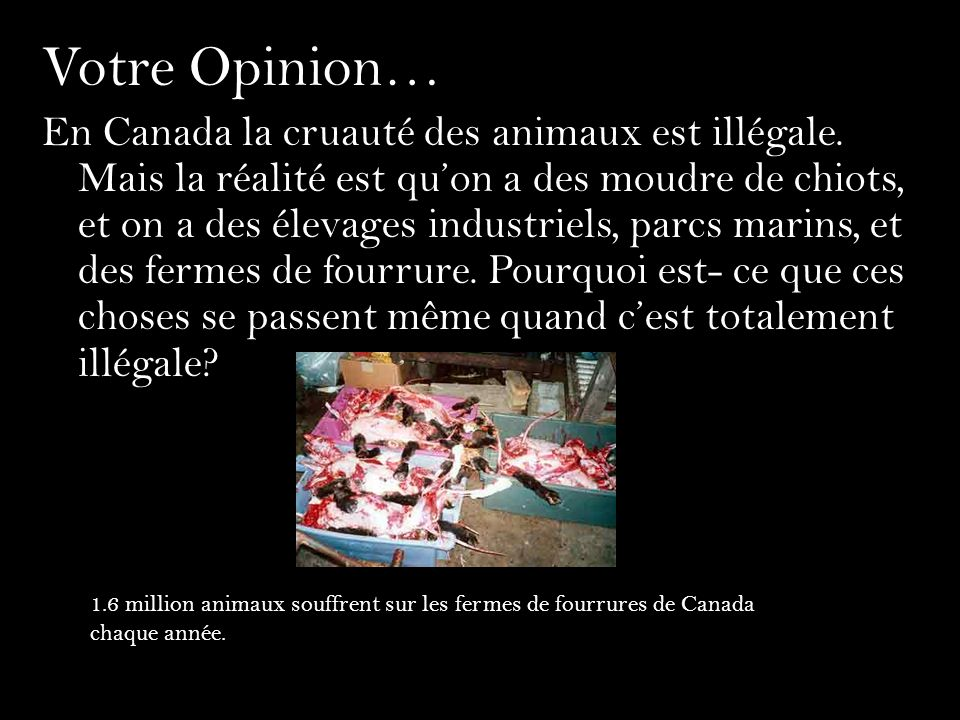Votre Opinion… En Canada la cruauté des animaux est illégale. Mais la réalité est quon a des moudre de chiots, et on a des élevages industriels, parcs
