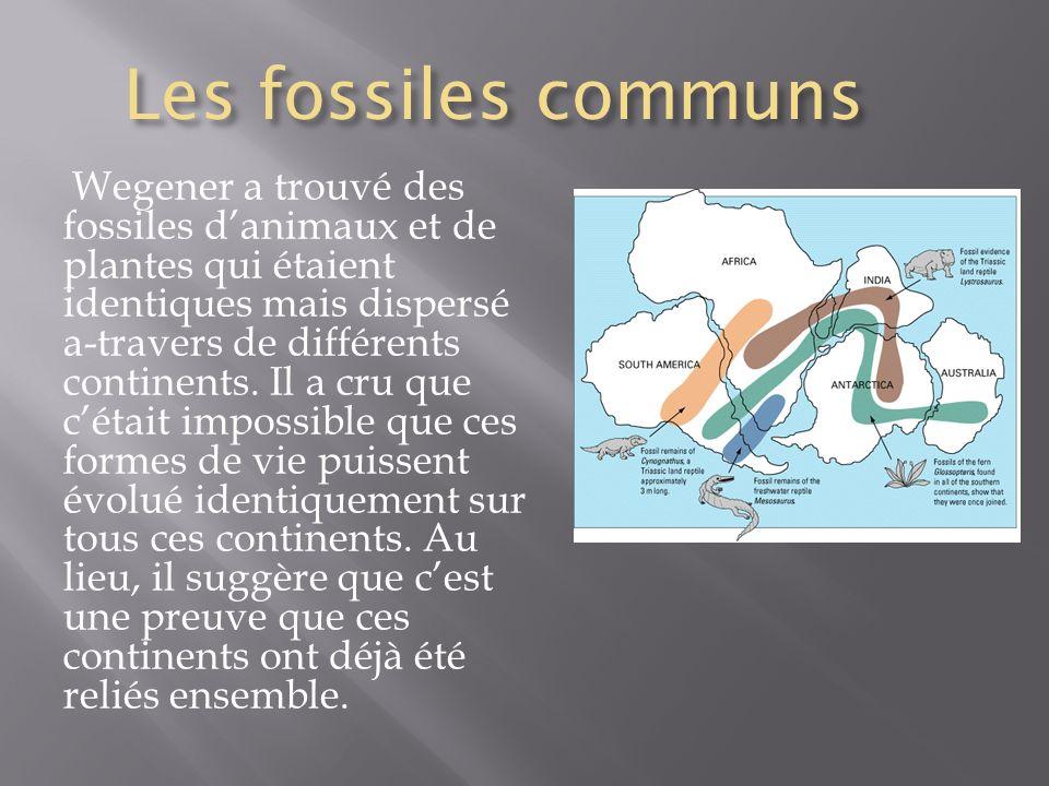 Les fossiles communs Wegener a trouvé des fossiles danimaux et de plantes qui étaient identiques mais dispersé a-travers de différents continents. Il