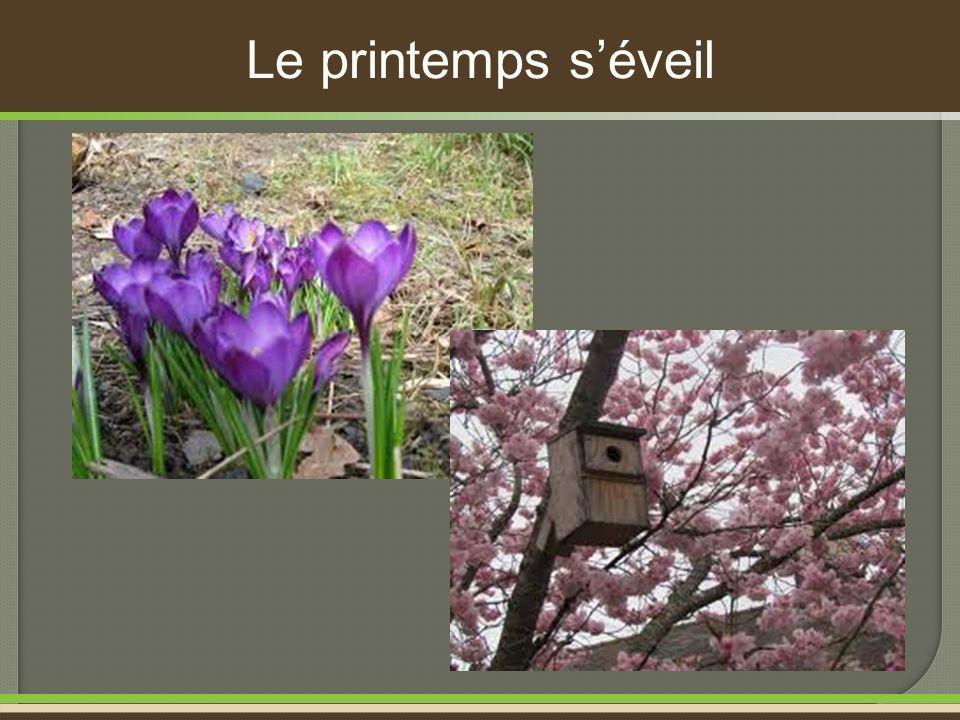 Le printemps séveil