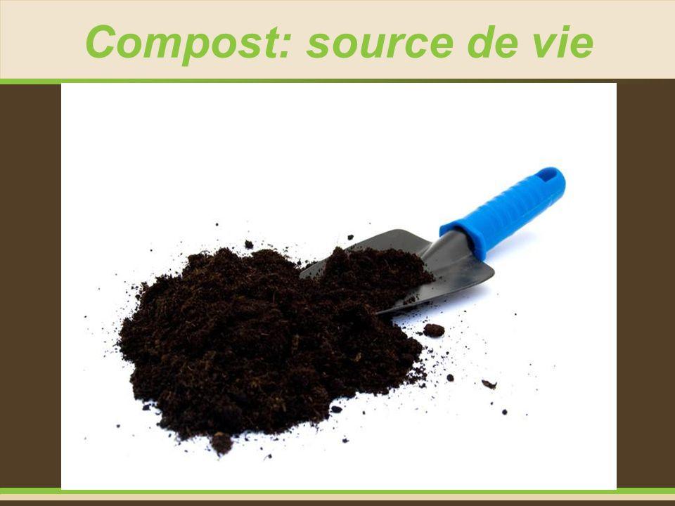 Compost: source de vie
