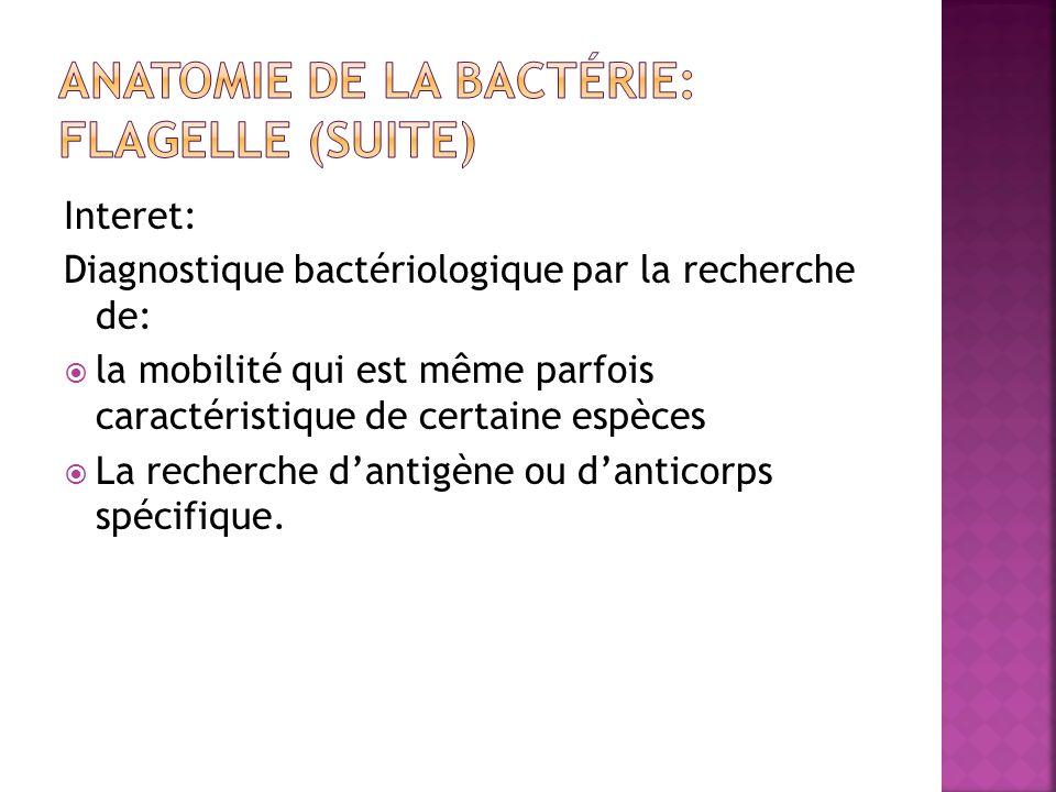 Interet: Diagnostique bactériologique par la recherche de: la mobilité qui est même parfois caractéristique de certaine espèces La recherche dantigène ou danticorps spécifique.