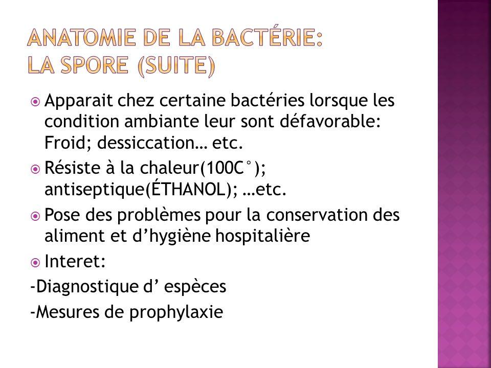 Apparait chez certaine bactéries lorsque les condition ambiante leur sont défavorable: Froid; dessiccation… etc.