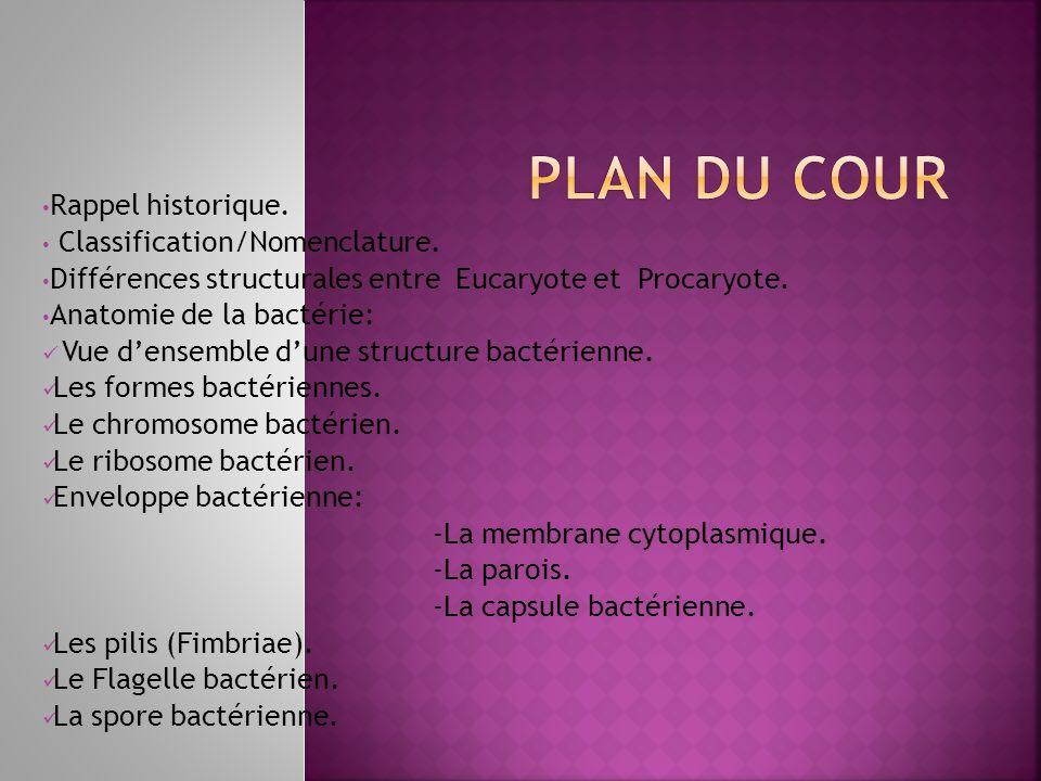 Rappel historique. Classification/Nomenclature. Différences structurales entre Eucaryote et Procaryote. Anatomie de la bactérie: Vue densemble dune st