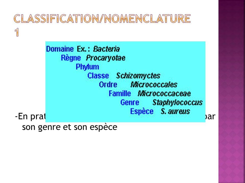 -En pratique médicale en nomme une bactérie par son genre et son espèce