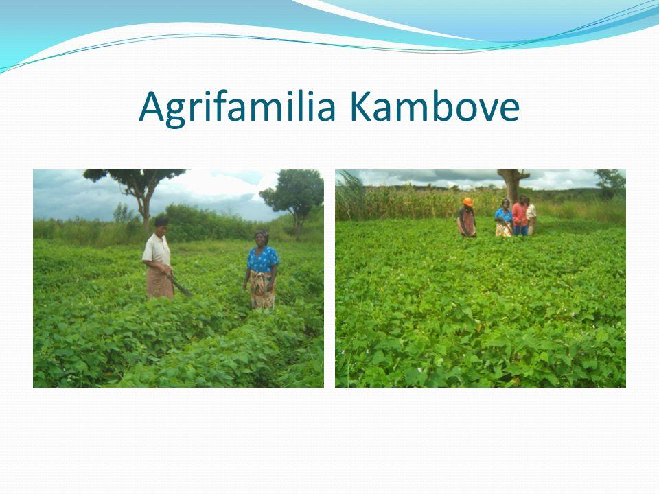 Agrifamilia Kambove