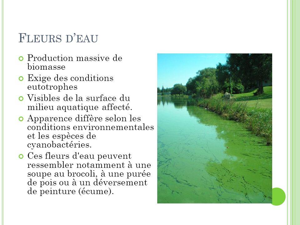 F LEURS D EAU Production massive de biomasse Exige des conditions eutotrophes Visibles de la surface du milieu aquatique affecté. Apparence diffère se