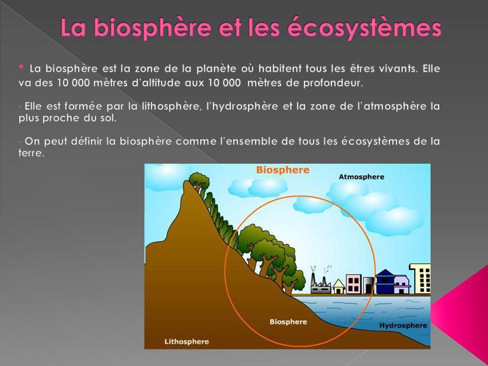 La biosphère se divise en écosystèmes.