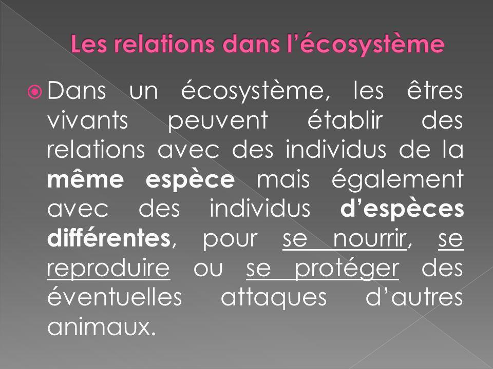 Dans un écosystème, les êtres vivants peuvent établir des relations avec des individus de la même espèce mais également avec des individus despèces di