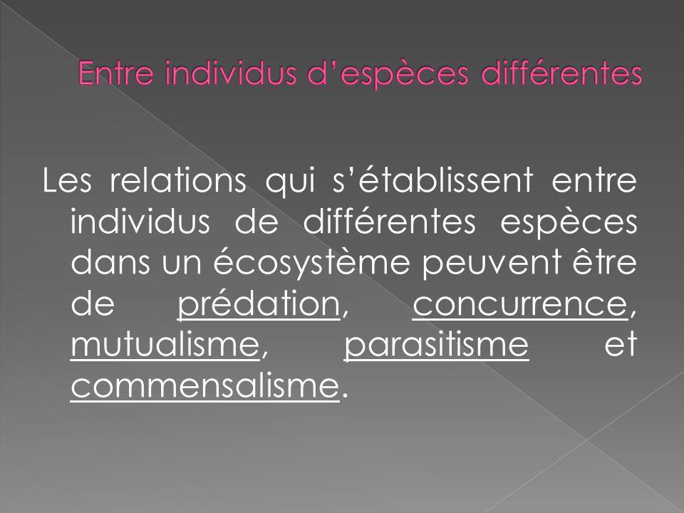 Les relations qui sétablissent entre individus de différentes espèces dans un écosystème peuvent être de prédation, concurrence, mutualisme, parasitis