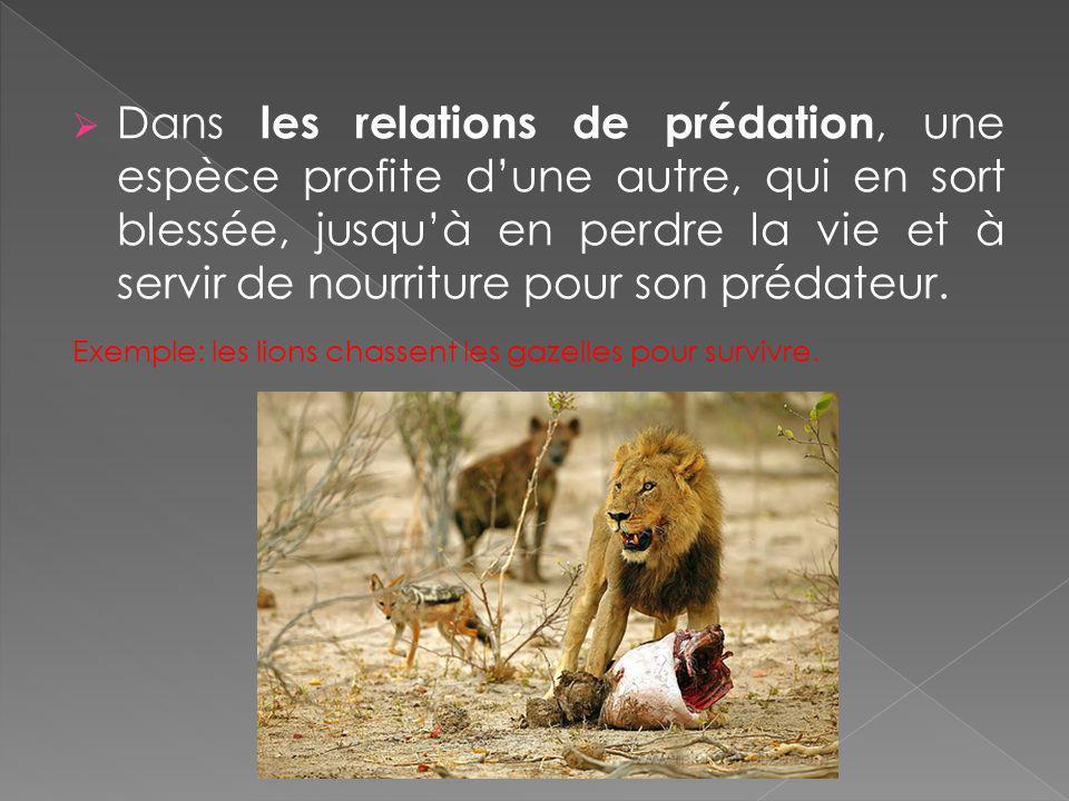 Dans les relations de prédation, une espèce profite dune autre, qui en sort blessée, jusquà en perdre la vie et à servir de nourriture pour son prédat