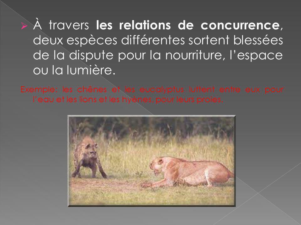 À travers les relations de concurrence, deux espèces différentes sortent blessées de la dispute pour la nourriture, lespace ou la lumière. Exemple: le