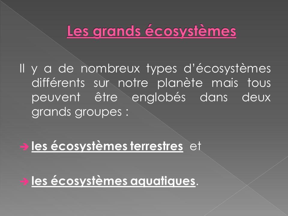 Il y a de nombreux types décosystèmes différents sur notre planète mais tous peuvent être englobés dans deux grands groupes : les écosystèmes terrestr