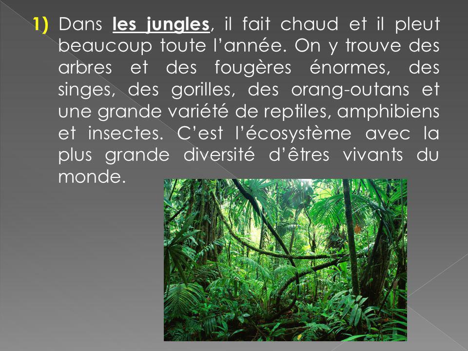 1) Dans les jungles, il fait chaud et il pleut beaucoup toute lannée. On y trouve des arbres et des fougères énormes, des singes, des gorilles, des or