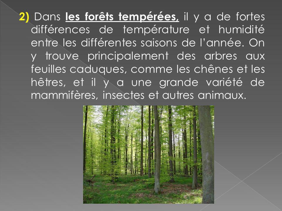 2) Dans les forêts tempérées, il y a de fortes différences de température et humidité entre les différentes saisons de lannée. On y trouve principalem