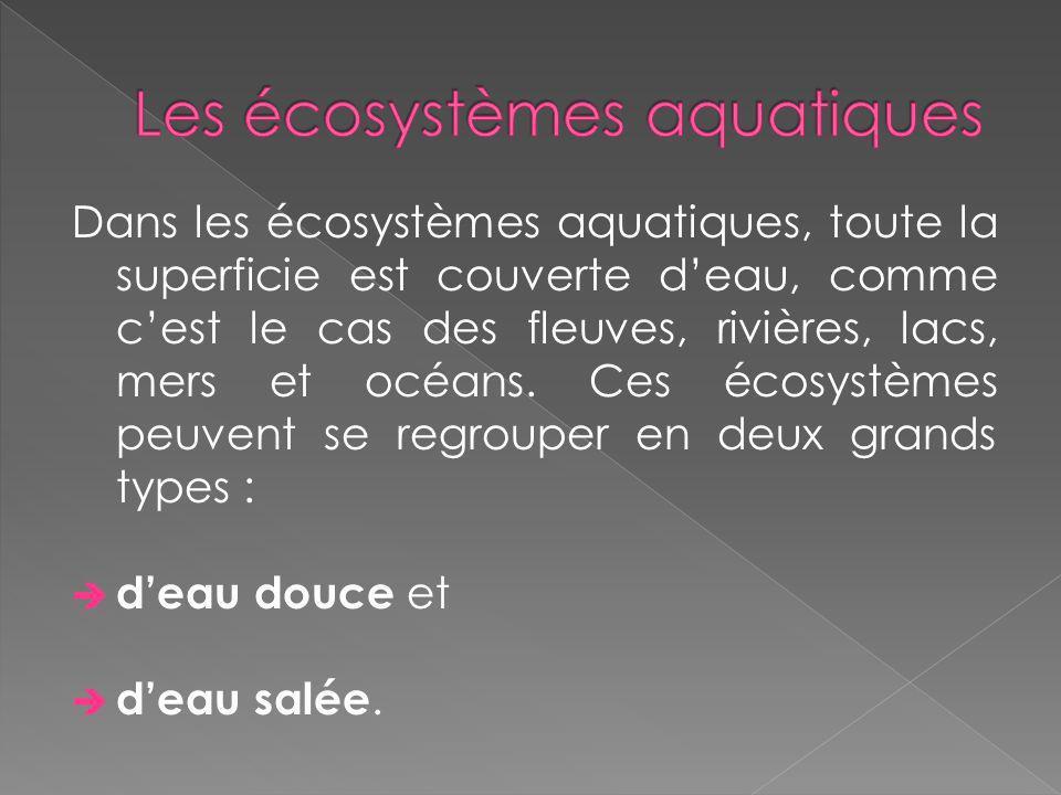Dans les écosystèmes aquatiques, toute la superficie est couverte deau, comme cest le cas des fleuves, rivières, lacs, mers et océans. Ces écosystèmes