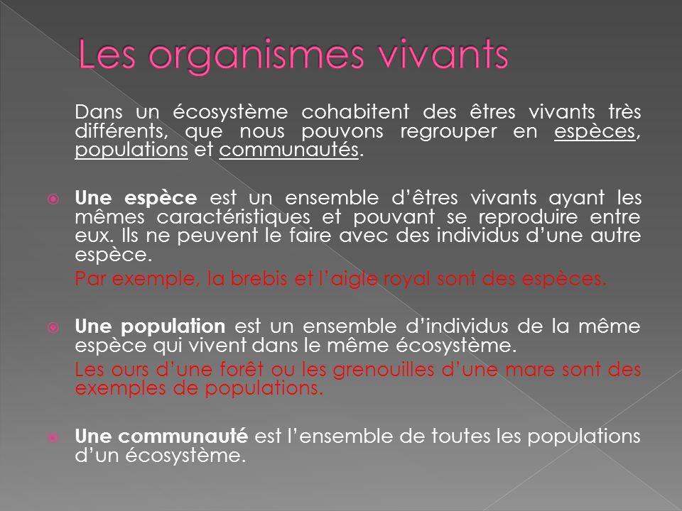 3) Explique quel type décosystème est la savane. Quels types danimaux y vivent? Et de plantes?