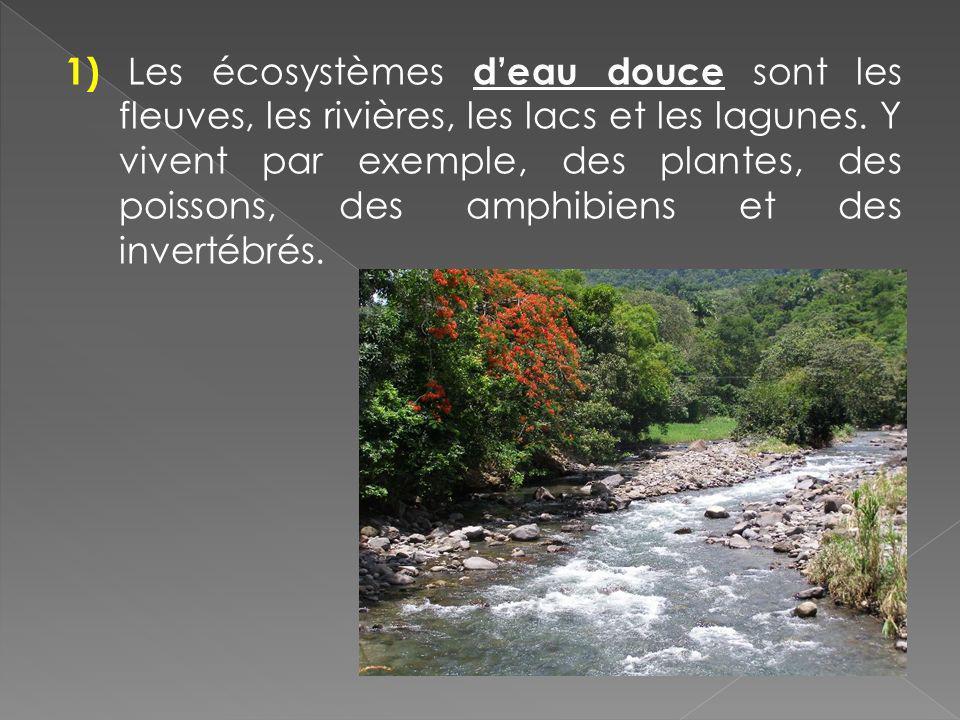 1) Les écosystèmes deau douce sont les fleuves, les rivières, les lacs et les lagunes. Y vivent par exemple, des plantes, des poissons, des amphibiens