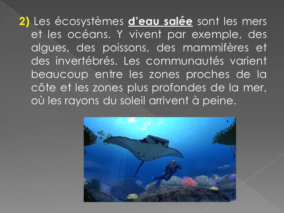 2) Les écosystèmes deau salée sont les mers et les océans. Y vivent par exemple, des algues, des poissons, des mammifères et des invertébrés. Les comm