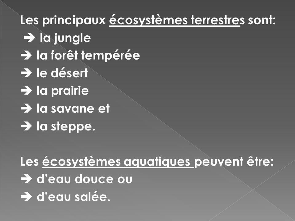 Les principaux écosystèmes terrestres sont: la jungle la forêt tempérée le désert la prairie la savane et la steppe. Les écosystèmes aquatiques peuven