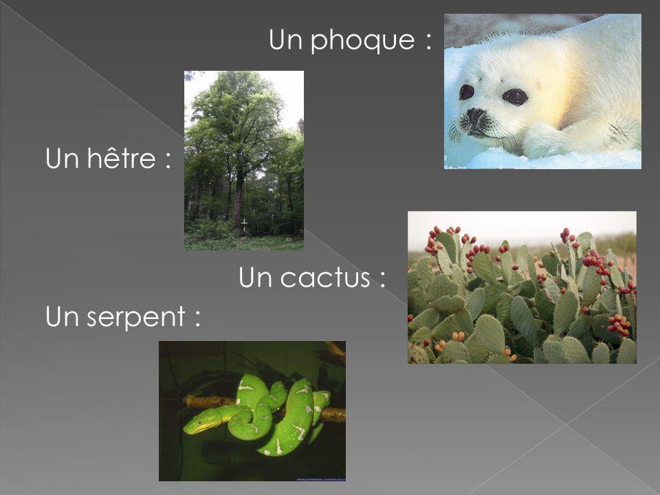 Un phoque : Un hêtre : Un cactus : Un serpent :