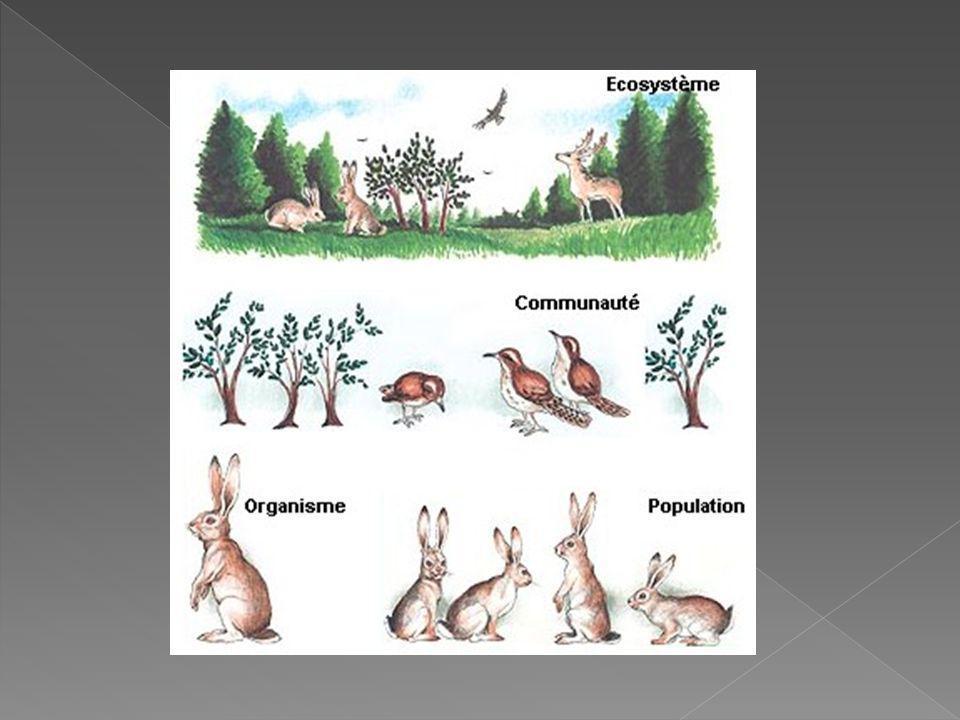 Les être vivants qui habitent dans un écosystème se classifient, daprès leur façon de salimenter, en producteurs, consommateurs primaires et secondaires et décomposeurs.