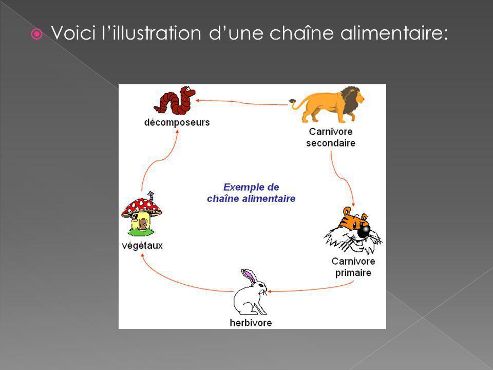 Voici lillustration dune chaîne alimentaire: