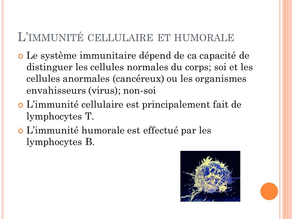 L IMMUNITÉ CELLULAIRE ET HUMORALE Le système immunitaire dépend de ca capacité de distinguer les cellules normales du corps; soi et les cellules anormales (cancéreux) ou les organismes envahisseurs (virus); non-soi Limmunité cellulaire est principalement fait de lymphocytes T.