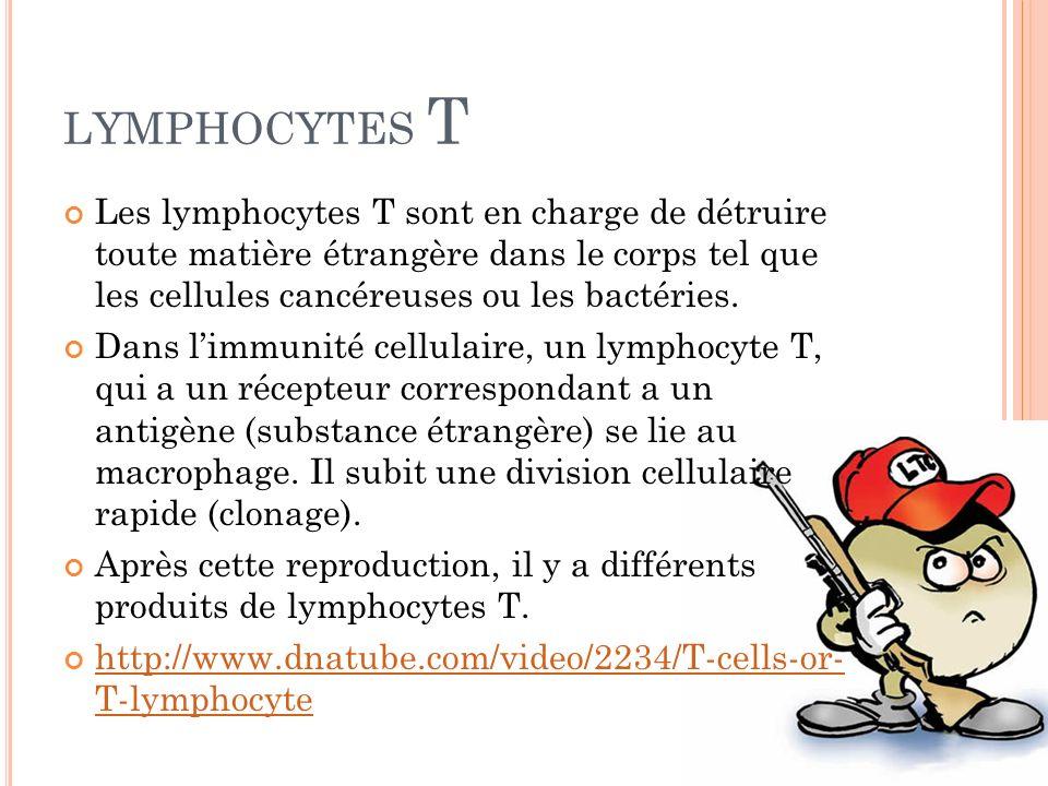 LYMPHOCYTES T Les lymphocytes T sont en charge de détruire toute matière étrangère dans le corps tel que les cellules cancéreuses ou les bactéries. Da