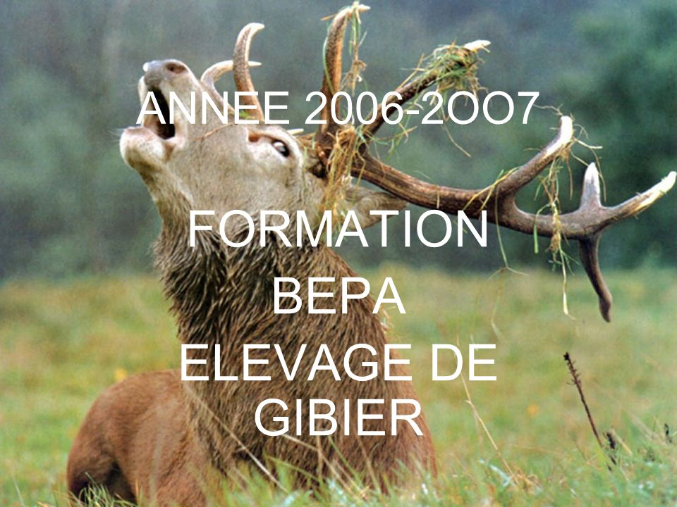 ANNEE 2006-2OO7 FORMATION BEPA ELEVAGE DE GIBIER