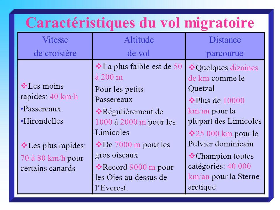 Caractéristiques du vol migratoire Vitesse de croisière Altitude de vol Distance parcourue Les moins rapides: 40 km/h Passereaux Hirondelles Les plus