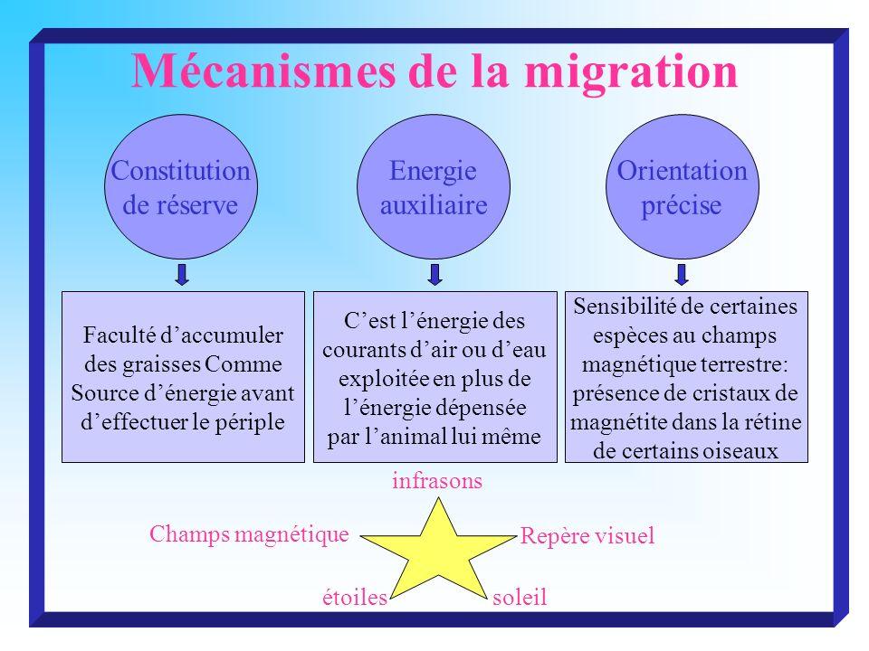 Mécanismes de la migration Constitution de réserve Energie auxiliaire Orientation précise Faculté daccumuler des graisses Comme Source dénergie avant