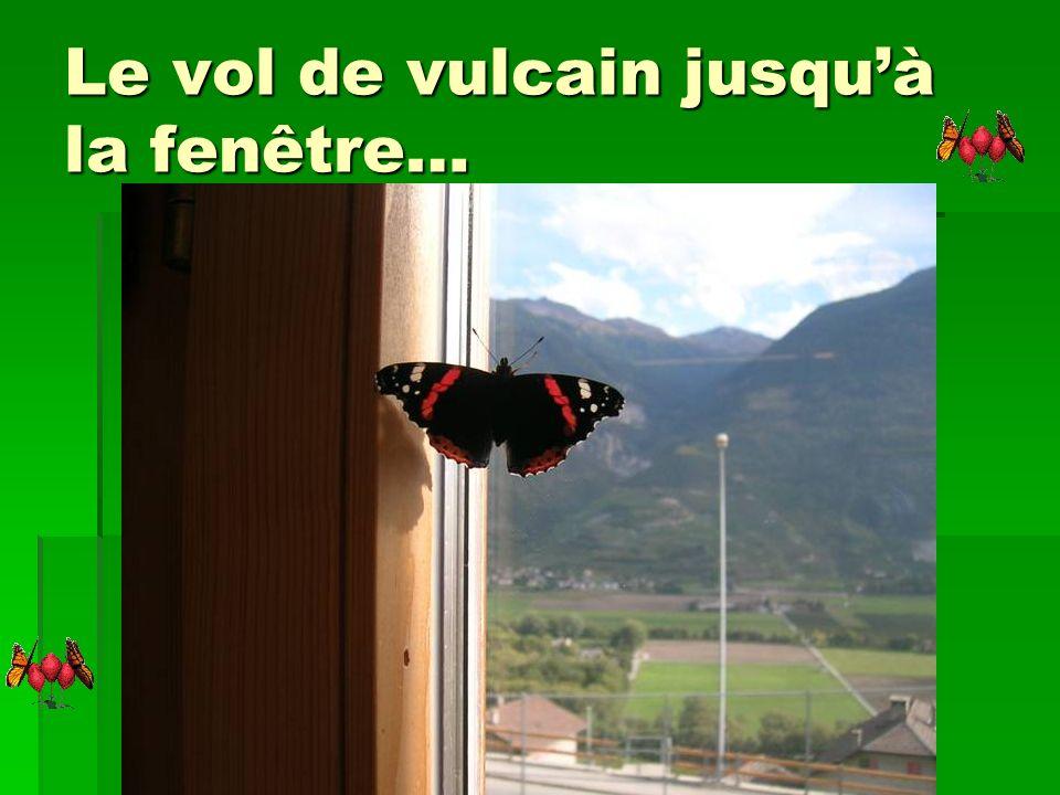 O2 oct.: notre papillon Vulcain est apparu…