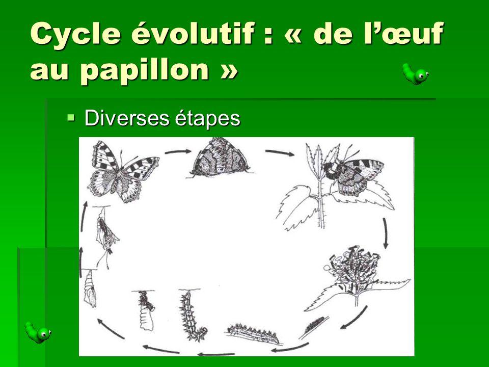 Cycle évolutif : « de lœuf au papillon » Diverses étapes Diverses étapes