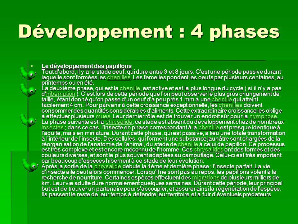 Développement : 4 phases Le développement des papillons Tout d abord, il y a le stade oeuf, qui dure entre 3 et 8 jours.