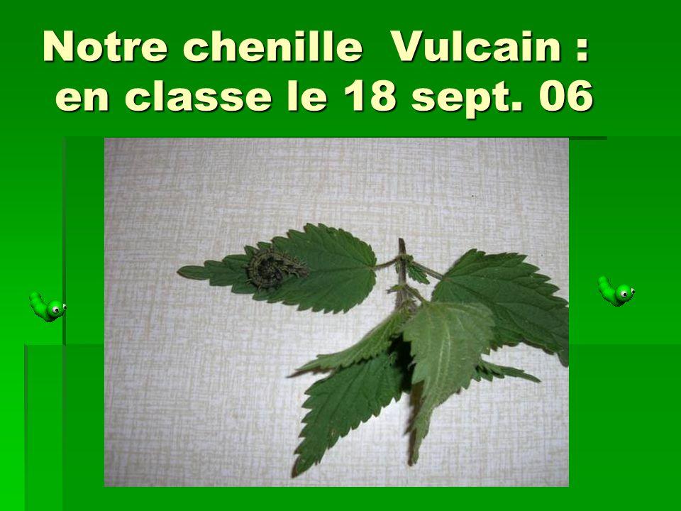 Notre chenille Vulcain : en classe le 18 sept. 06