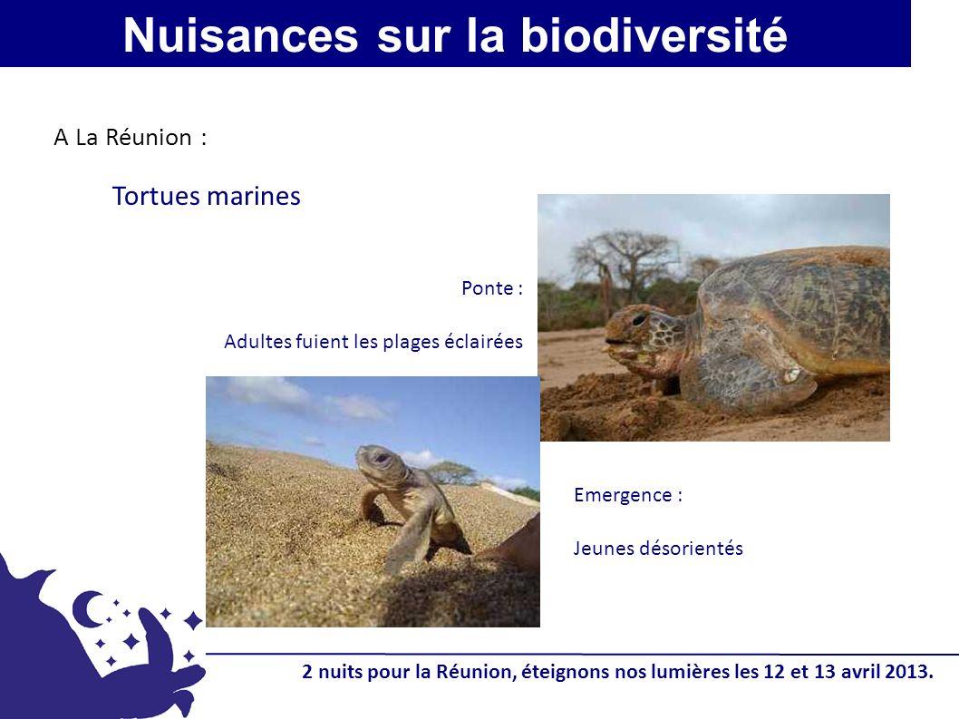 Tortues marines Ponte : Adultes fuient les plages éclairées Emergence : Jeunes désorientés Nuisances sur la biodiversité A La Réunion : 2 nuits pour l