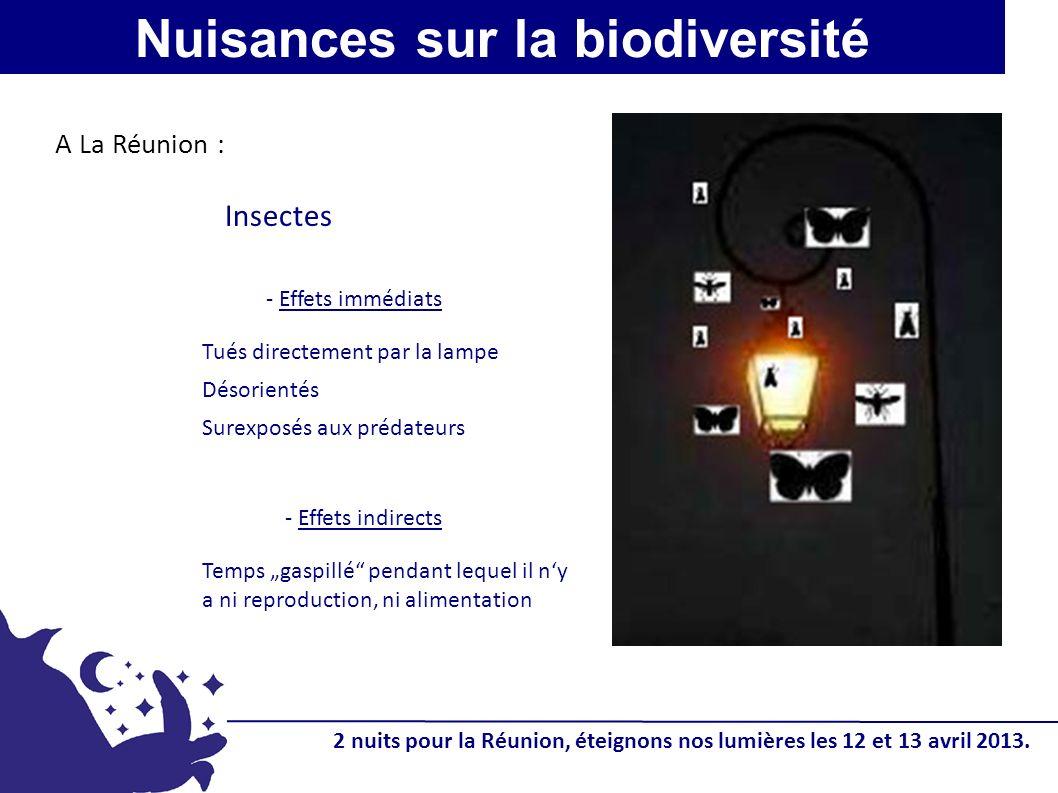 Tués directement par la lampe Désorientés Surexposés aux prédateurs - Effets immédiats Nuisances sur la biodiversité Insectes A La Réunion : - Effets