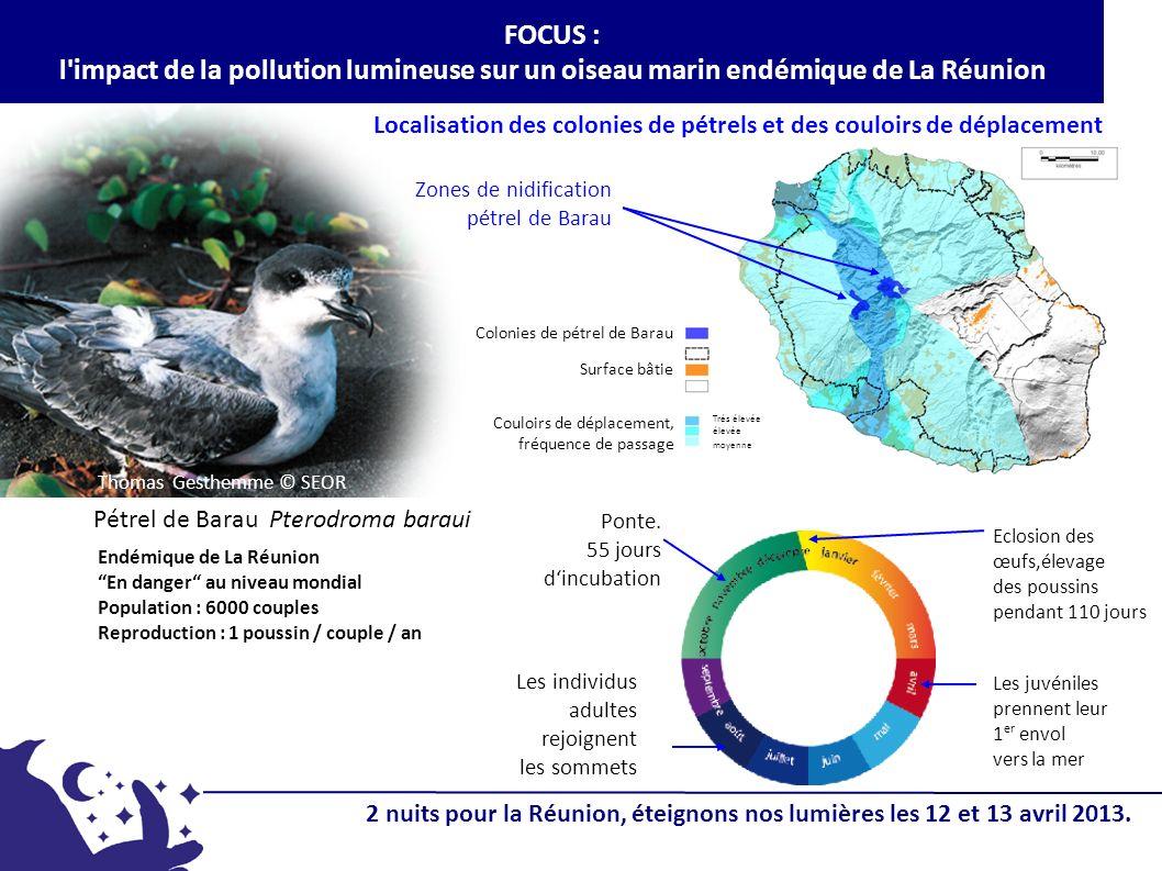Pétrel de Barau Pterodroma baraui Localisation des colonies de pétrels et des couloirs de déplacement Les individus adultes rejoignent les sommets Zon
