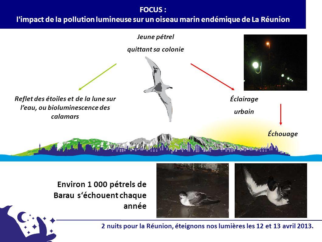 Jeune pétrel quittant sa colonie Reflet des étoiles et de la lune sur leau, ou bioluminescence des calamars Échouage FOCUS : l impact de la pollution lumineuse sur un oiseau marin endémique de La Réunion Éclairage urbain Environ 1 000 pétrels de Barau séchouent chaque année 2 nuits pour la Réunion, éteignons nos lumières les 12 et 13 avril 2013.